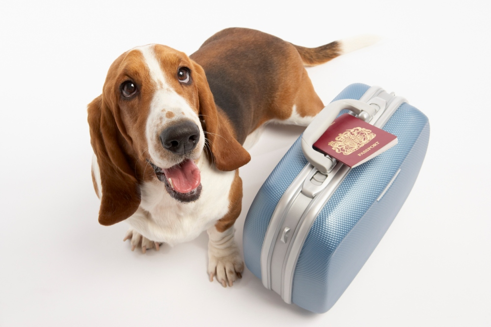 Dog with suitcase and passport
