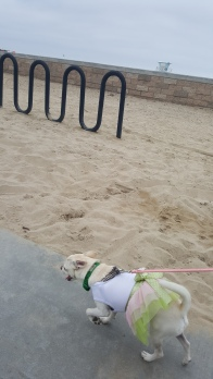 I couldn't wait to get into the sand at Huntington Beach.