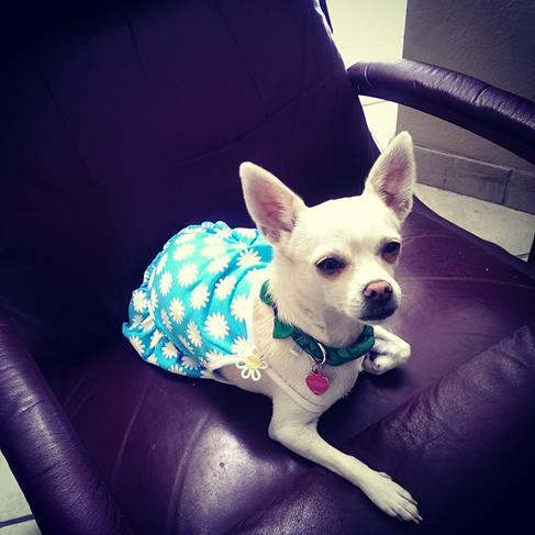 zeva daisy dress