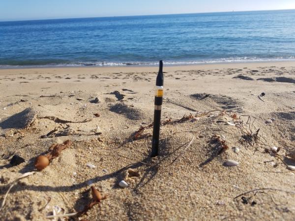 bio cbd beach